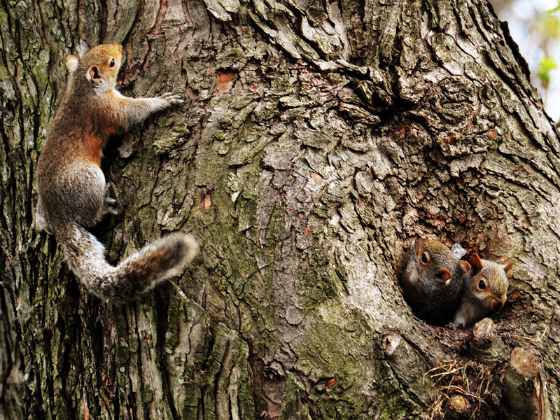 Squirrels<br>April 2013
